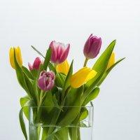Тюльпаны в вазе :: Александр Орлов