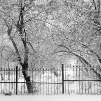 Снегопад... :: Дмитрий Петренко
