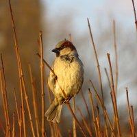 Одна маленькая, но гордая птичка :: Андрей Лукьянов