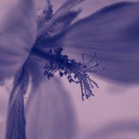 Таинственный цветок :: Nataliya Zvorigina