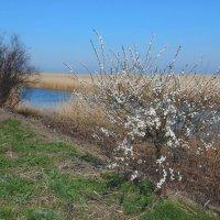 Весна в Приазовье :: Владимир