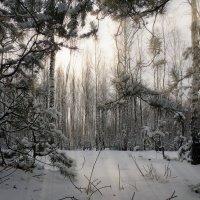 Зимний лес :: Роман Савоцкий