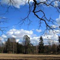 Апрельское небо :: Ирина Румянцева