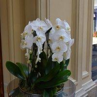 В ГУМе повсюду орхидеи. :: Татьяна Помогалова