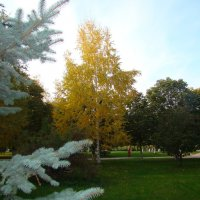 В парке осень... :: марина ковшова