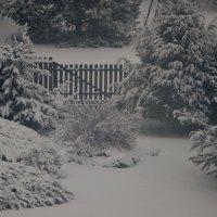 Снежная зима :: Dana