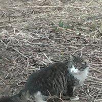 Кошка Мурка на прогулке! :: Светлана Калмыкова