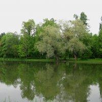 Весна в Царском Селе. :: Лариса (Phinikia) Двойникова