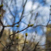 Весна :: Игорь Герман