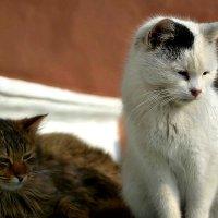 Монастырские коты, а может кошки? :: Михаил Столяров