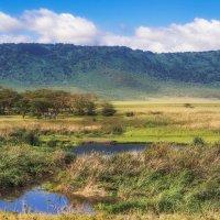 Полдень...жара...три(зебры)+один(гиппопотам) и оазис в саванне...Танзания! :: Александр Вивчарик