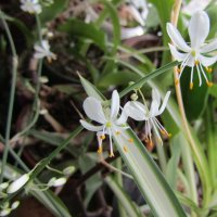 Весна на подоконнике :: Galaelina