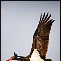 vit5  серия - птицы :: Vitaly Faiv