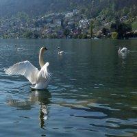 Лебединое озеро :: Nata_li В.
