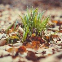 весна :: Эдуард Куклин