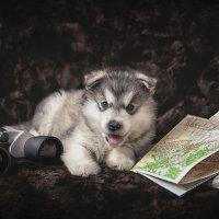 Маленький путешественник :: Оля Володина (Бурмистрова)
