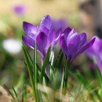 Весна :: Андрей Бондаренко