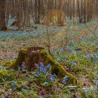 И даже пень в апрельский день березкой тоже стать мечтает. :: Roman Dergunov