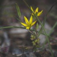 весна :: Алина Гриб