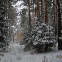 зима в лесу :: Александр Попков