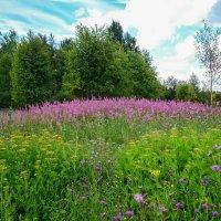 Цветочная поляна :: Serega