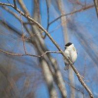 Птаха :: Владилен Панченко
