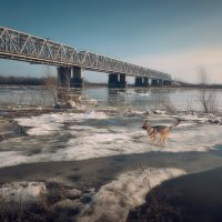 ВЕСЕННИЕ РАДОСТИ :: Sergey Komarov