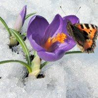 Бабочки проснулись. :: Hаталья Беклова