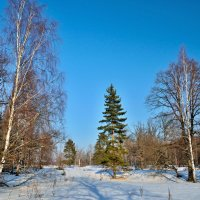 Лес на левом берегу Клязьмы :: Владимир Дементьев