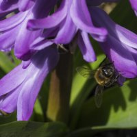 пчелки :: Анастасия Рогозина