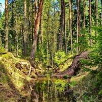 Майская зелень :: Ольга СПб