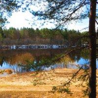 Берег реки Чагодощи. :: ВАЛЕНТИНА ИВАНОВА