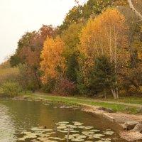 Осень в лунном парке :: Никита Козырев