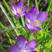 За окном весна. :: Tatyana