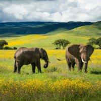 Слоны в полевых цветах :: Кирилл Трубицын