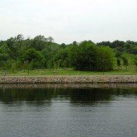 Зелёные деревья у реки :: Дмитрий Никитин