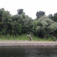 Лес у реки :: Дмитрий Никитин