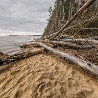 Падшие дерева 3 :: Владимир Самсонов