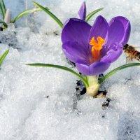 Бабочка улетела , пчёлка прилетела. :: Hаталья Беклова