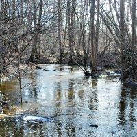 Весна на лесной реке :: Николай Масляев