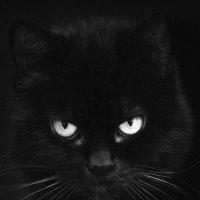 Черный кот :: Muhammad
