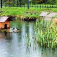 Льются водяные струи, звеня каплями дождя . :: Валентина ツ ღ✿ღ