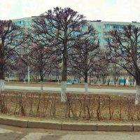 Спальный район. Апрель. :: Михаил Николаев