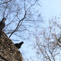 Птицы Мира :: Роман Никитин