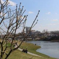 Весна :: Роман Никитин