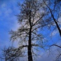 После зимие... :: Владимир Куликов