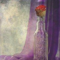 Бутоны роз.. :: Вера