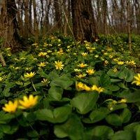 Весны цветение... :: владимир