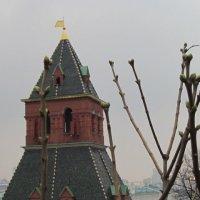 Тайницкая башня Московского Кремля :: Маера Урусова