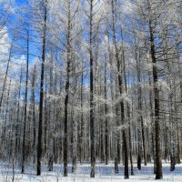 зима :: Горкун Ольга Николаевна